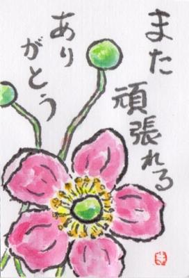 img058秋明菊