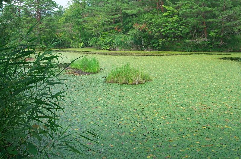 レンゲ沼、姫沼