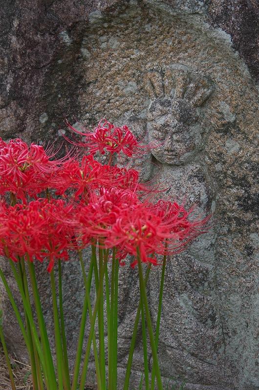 彼岸花が咲く頃 ~菊川、袋井~