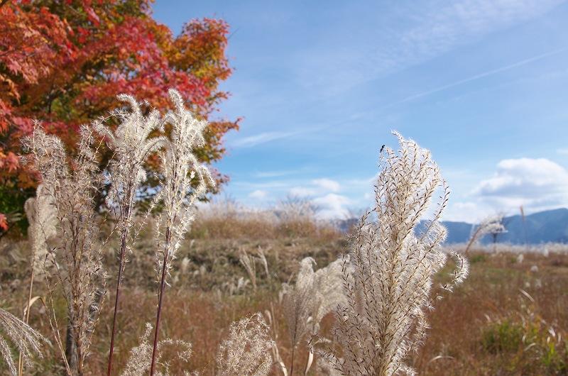 天竜スーパー林道 4 ~ススキのある風景~
