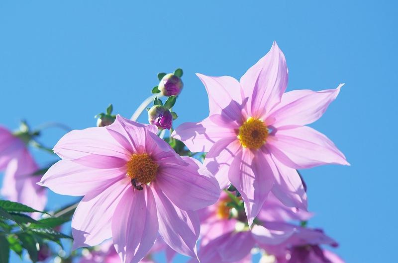 花になろう