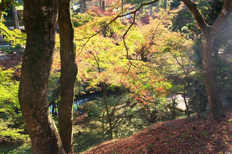 晩秋の大洞院 二