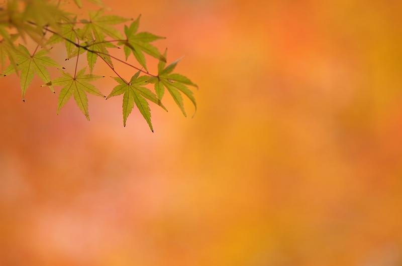 秋深し 二
