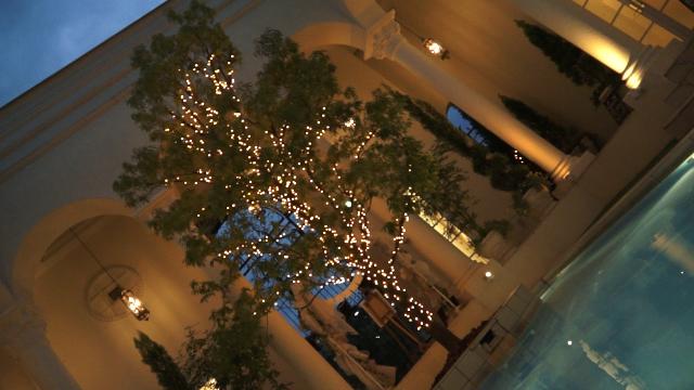 クリスマスツリーとイルミと池