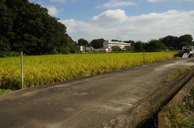 さてさて、稲刈りの始まり始まり