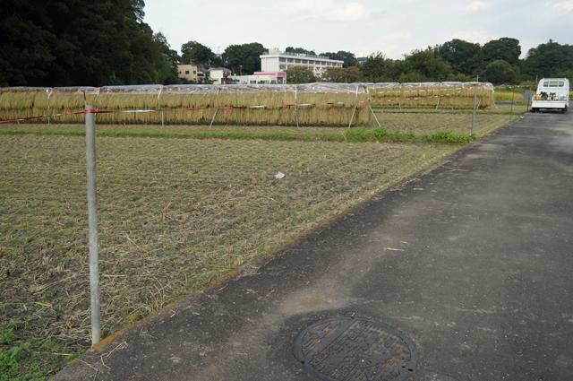 家から離れた場所の稲刈り、終了