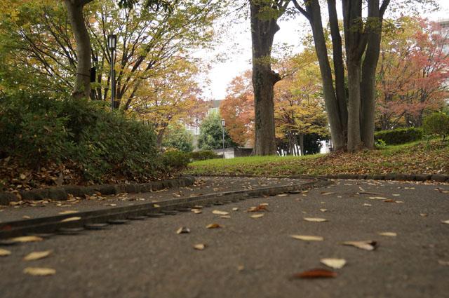 落ち葉のパラパラ舞う軌道敷