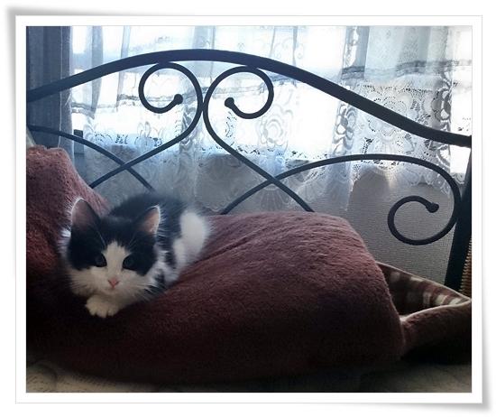 猫ベッド ドーム型