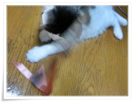 100均 猫のおもちゃ