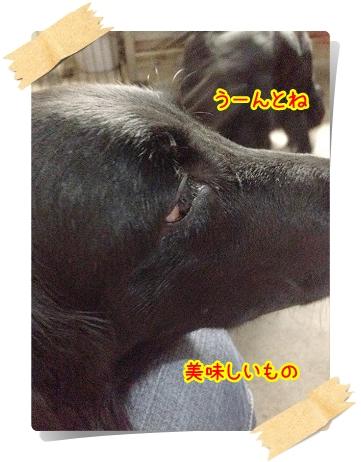 IMG_5640.jpg