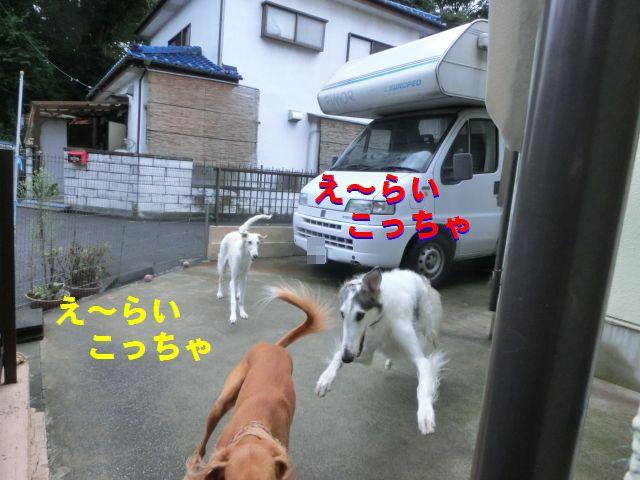 a5_20151105155422fc5.jpg