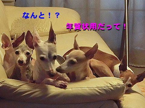 a_20151116232545115.jpg