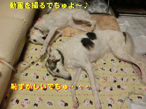 b_2015102001324456f.jpg