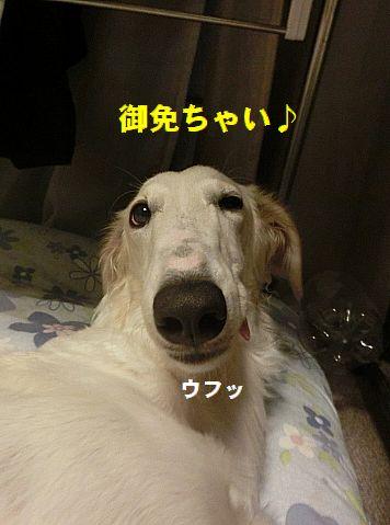 f_20150825231312c59.jpg