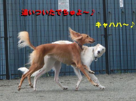 f_20150828003257189.jpg