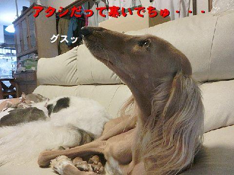 f_20151208231738719.jpg