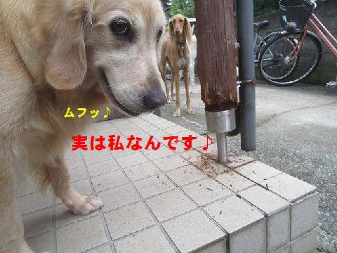 h_20150901005100351.jpg