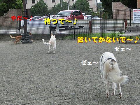 h_20150914005543c66.jpg