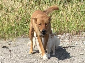 鹿島港 犬