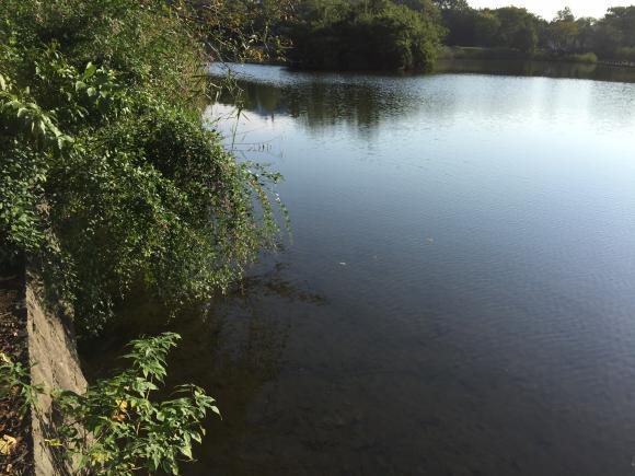 秋のバス釣り 虫パターン