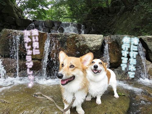 滝にうたれて