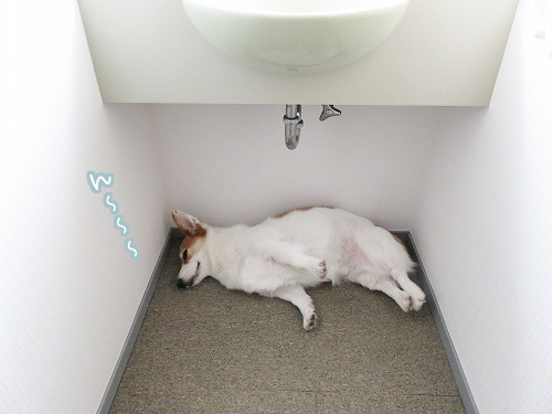 洗面所の下
