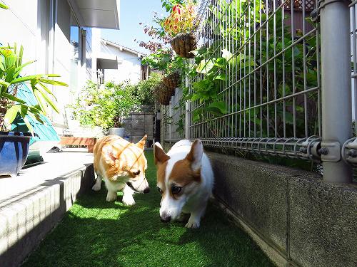 庭をウロウロ~