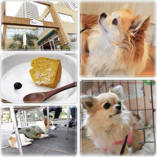 Y's Dogcafe