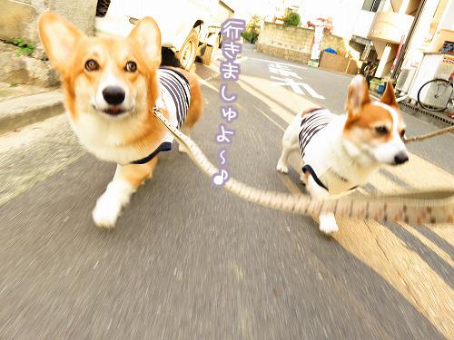 お散歩開始~