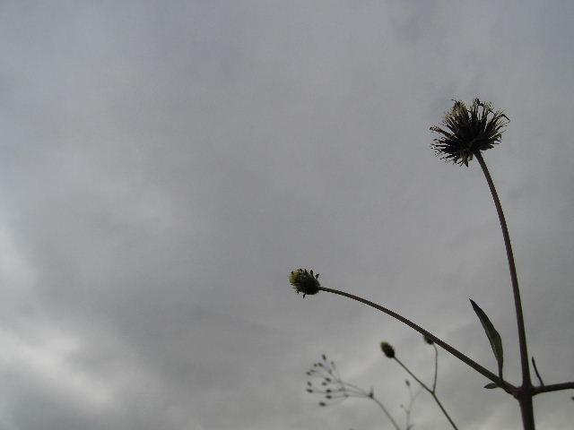 曇ってきた