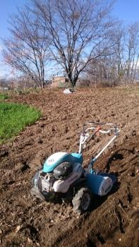 20151124秋の畑