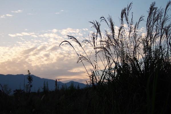 秋の風景 ススキ