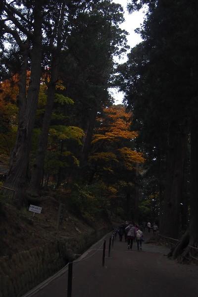 中尊寺 月見坂 両脇には江戸時代に伊達藩によって植樹された樹齢300年を数えようかという幾本もの老杉がある