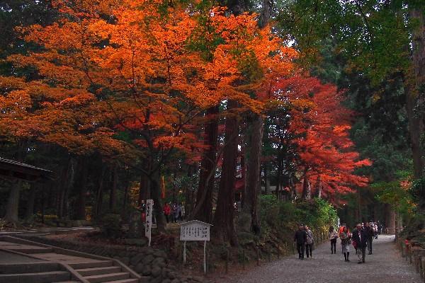 中尊寺境内は月見坂を登る途中 弁慶堂(旧愛宕堂)(べんけいどう)付近 紅葉