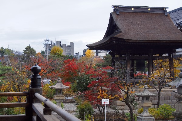 秋色の善光寺境内