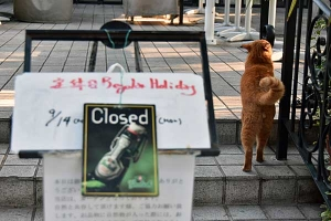 Cat and Closed Sign