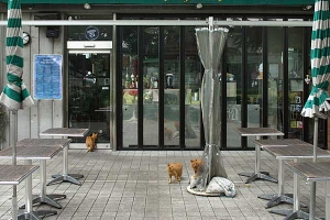 Cats in the restaurant before open