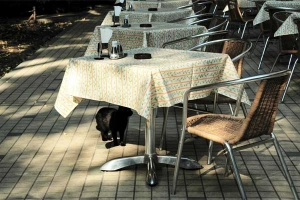 Cat and restaurant tables