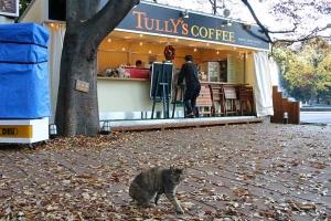 Coffee shop cat