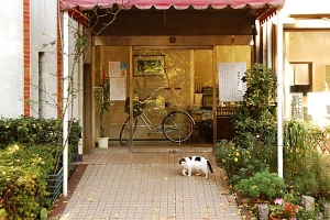 Cat at a restaurant entrance