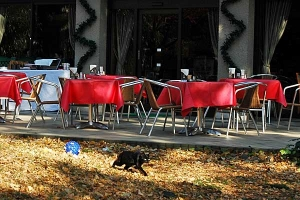 Cat and Christmas tables
