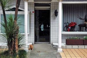 Cat at a restaurant door