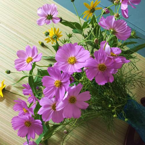 秋の花、今年もまた・・・