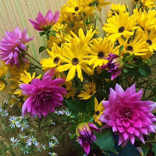 サリーに似合うひまわり系の花