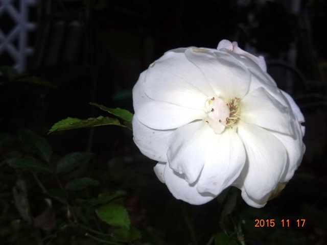 DSC03822_20151118145358285.jpg