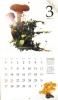 2016きのこカレンダー3