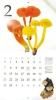 2016きのこカレンダー2