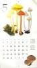 2016きのこカレンダー7