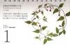 本田尚子カレンダー1201