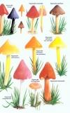 Collins_Fungi_Guide5.jpg